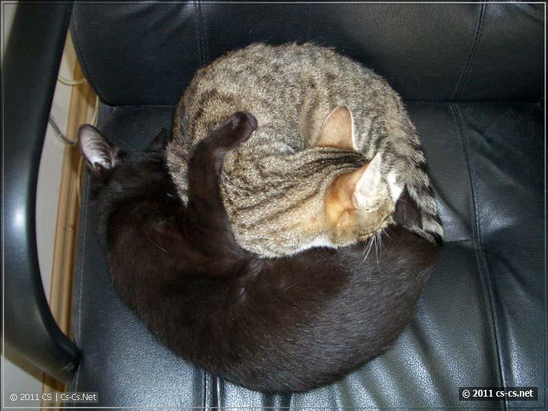 Кошки же!