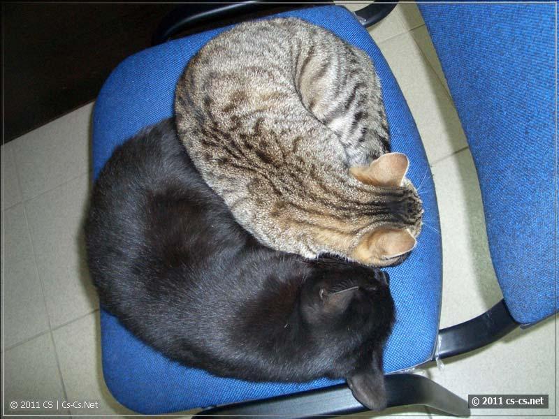 Няки дремлют вместе, греются!