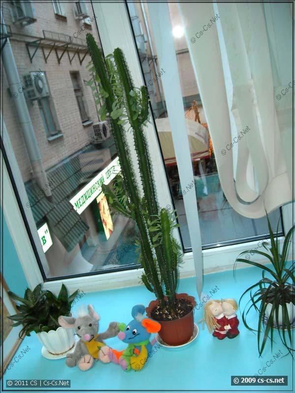И поставили свои любимые кактусы на окна