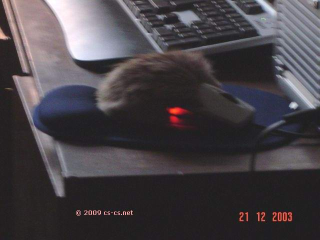 Мышь DJ Riff'а с наклеенным мехом (светитцо!) :)