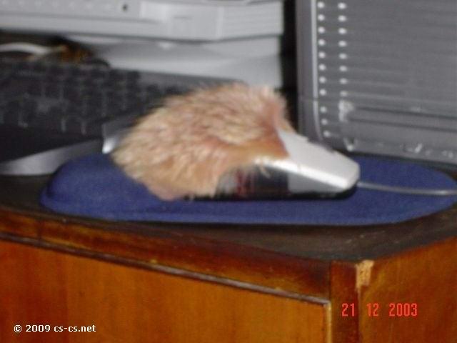 Мышь DJ Riff'а с наклеенным мехом :)