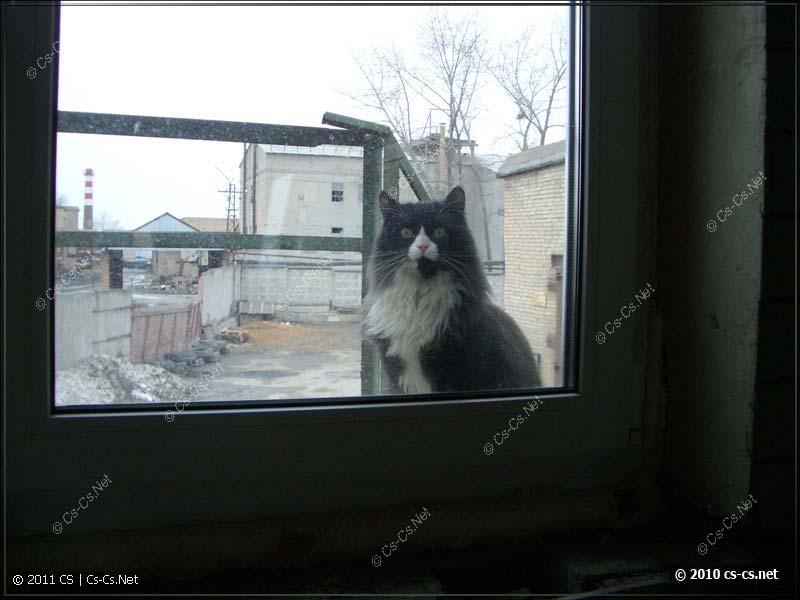 Знакомьтесь: Админская Кошка ZyXel