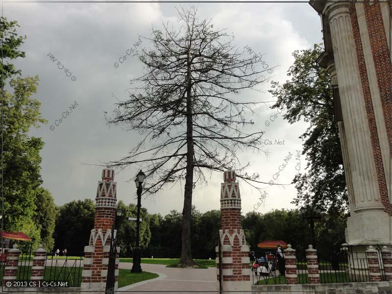 Глючное дерево