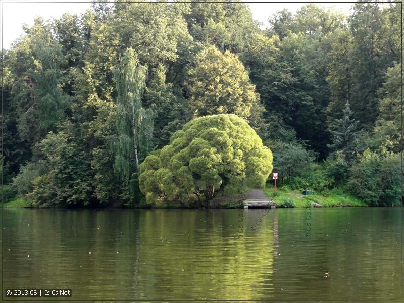 Курасивое дерево!