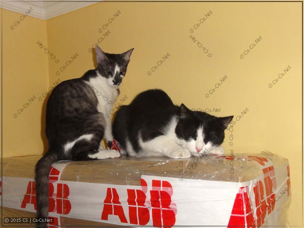 Кошки опробуют шкаф TwinLine на прочность
