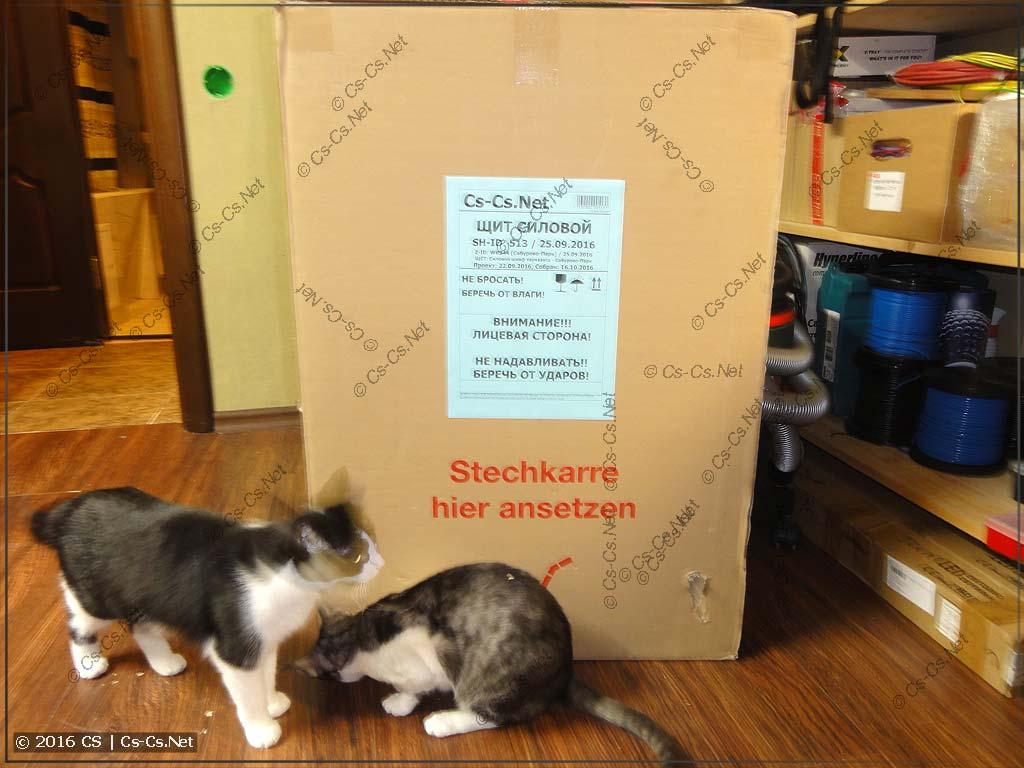 Кошки учуяли чего-то интересное около коробки