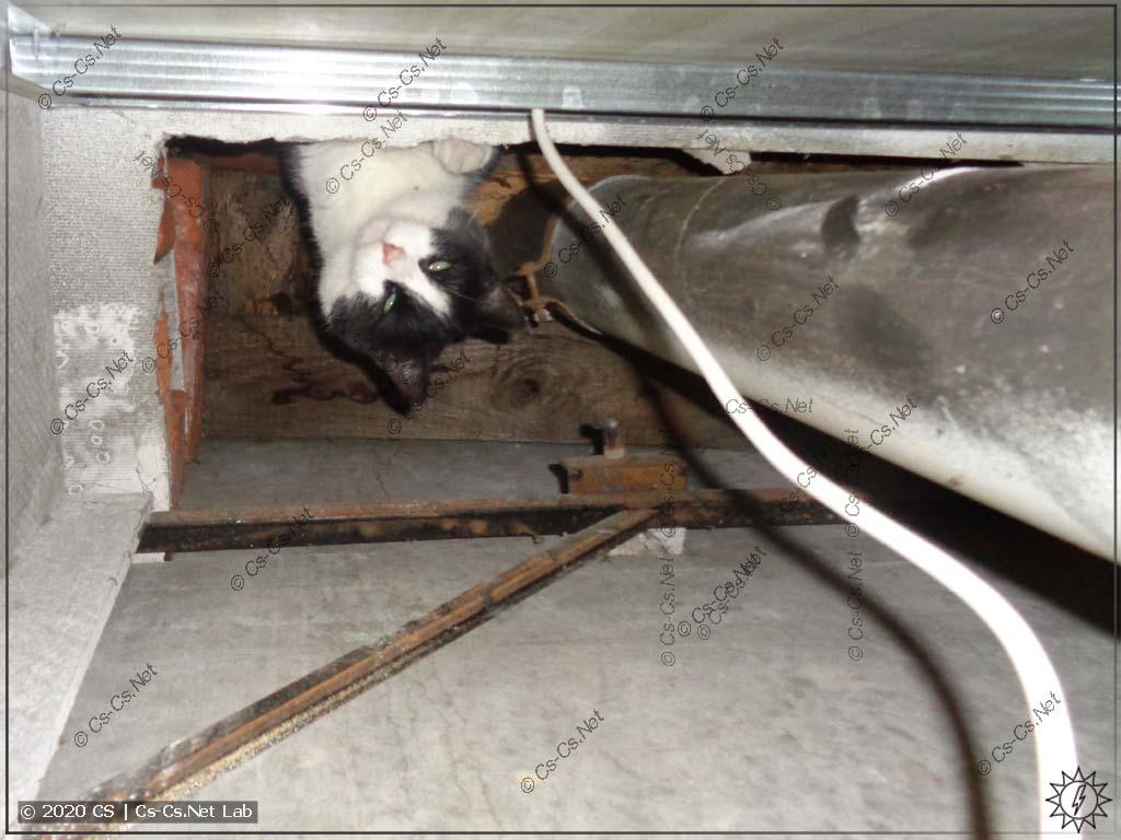 Кошка забралась на самый верх сантехкабины и вальяжно развалилась лапами